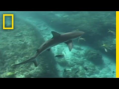 Za žralokem citronovým