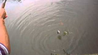 Pescaria Tilápia No Sítio (poço De Peixe - Criação)