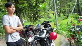Vườn sầu riêng của Anh 3 Dậy ở Cai Lậy, Tiền Giang