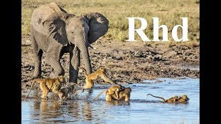 Video Baboons and Elephants of Chobe River,  Nature 2018 full HD Documentary. MP3, 3GP, MP4, WEBM, AVI, FLV Juni 2019