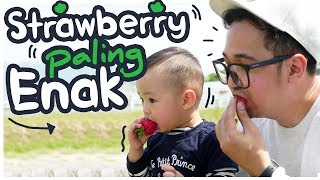 Video BERBURU STRAWBERRY TERENAK DI DUNIA!! [ Japan Vlog ] MP3, 3GP, MP4, WEBM, AVI, FLV Oktober 2018