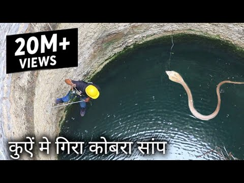 Dangerous cobra snake Rescue operation in the well from Ahmednagar maharashtra