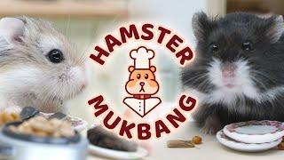 Hamster Mukbang ASMR - Starring Rocket and Brimley by AprilsAnimals