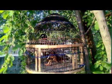 Video New black francolin video-Black teetar voice{kala teetar new} download in MP3, 3GP, MP4, WEBM, AVI, FLV January 2017