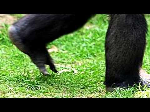Fossil toe bone makes news – Ardipithecus Raminus kaddaba