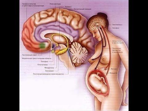 Про гормоны нашего организма, как это влияет на нашу жизнь