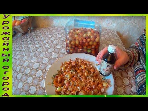 Майя белоусова (петрищева)