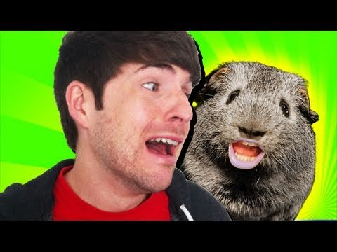 Charlie - CHECK OUT CHARLIE'S WEEKLY SHOW: http://youtube.com/askcharlie In the third installment of Charlie the Drunk Guinea Pig, Charlie gets some lovin, a new arch ...
