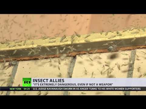 Biological arms? US military wants insects to spread genetically modified viruses to 'save crops'
