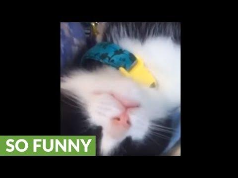 il-gattino-che-sogna-di-bere-il-latte