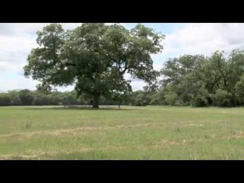 151.3 acres Gatesville, TX
