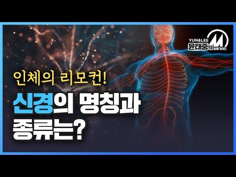 [윤태중의 M 장해 가이드] 교통사고 후유증이 많이 남는 신경의 명칭과 종류