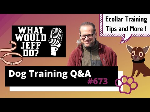 Dog Training Q&A - Ecollar Training - Stop Resource Guarding - What Would Jeff Do? Ep.673 (2020)