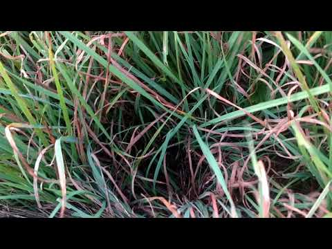 Cover crop, manure and hay