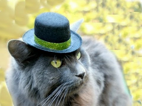 Top Hats for CATS! LÜT #25