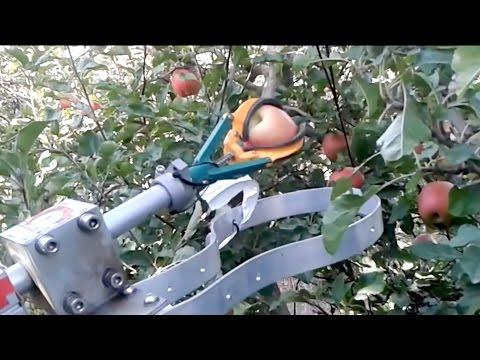 找嘸採果工 這台多爪機器人也太會摘[影]
