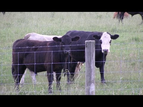 Raising Cattle 101 with Donald Tarter
