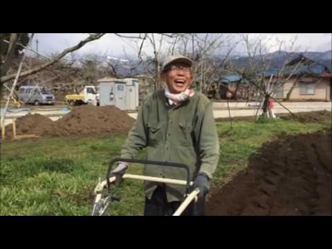 里芋の植え付け作業、まずはこれから