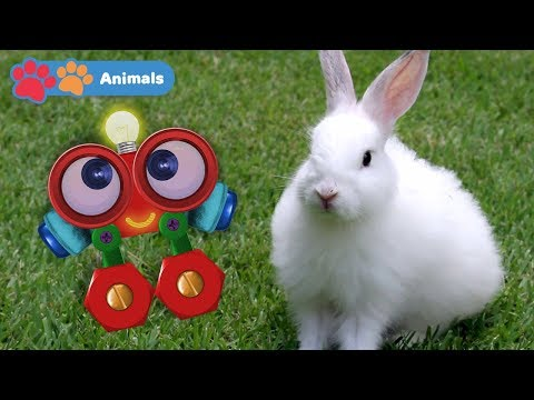 Kids Learn About Animals with Robi   Educational Early Learning Videos with Rabbit, Cow & Monkey