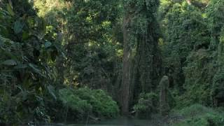 Dooars India  City pictures : Chilapata - The Dark Forest - Dooars - Colours of West Bengal - Destination East - Incredible India