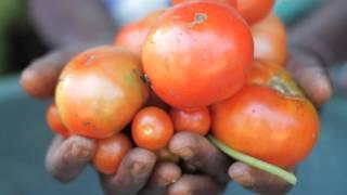 【公開セミナー】アフリカ×FAO 食料情報のGIEWSとは何か