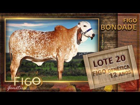 LOTE 20 - FIGO BONDADE