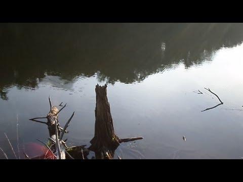 Spring Pond Bass Fishing