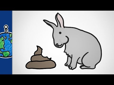 Why Do Some Animals Eat Poop?