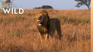 Which Animals Are the Loudest? | Animal Autofill by Nat Geo WILD