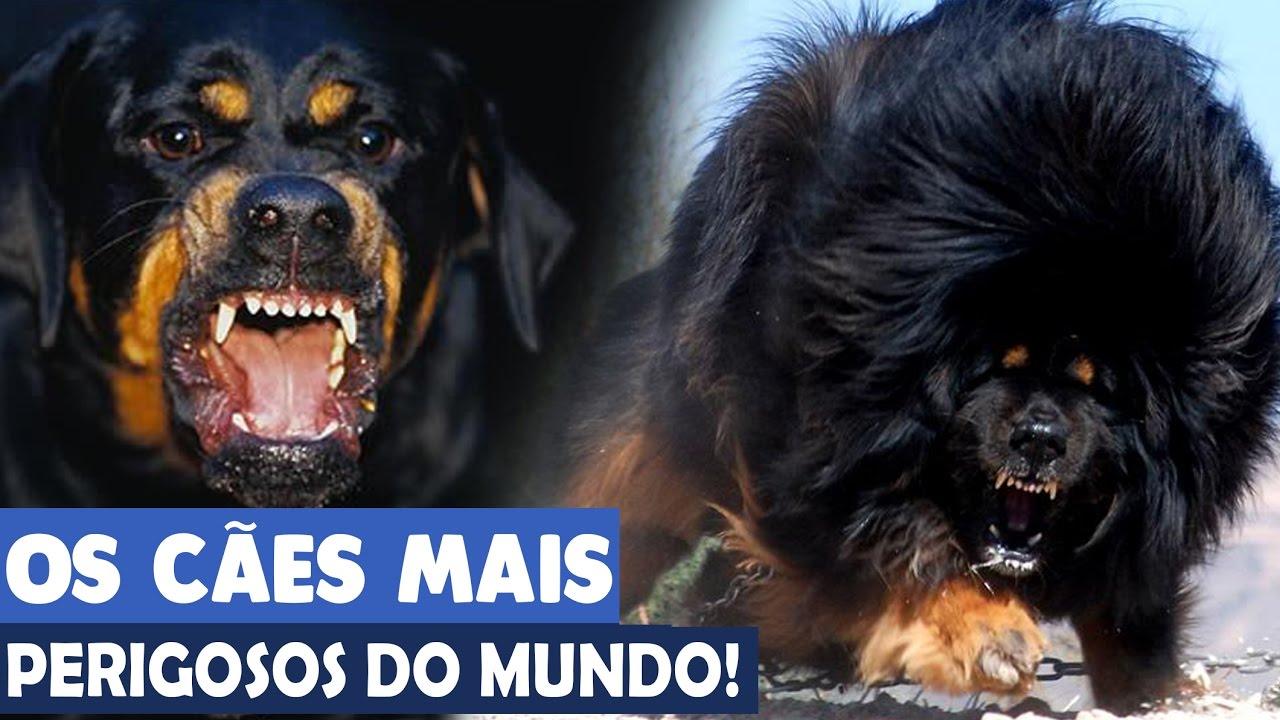 Você conhece as 10 raças de cães mais perigosas do mundo?