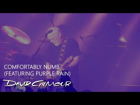 David Gilmour - Comfortably Numb + Purple Rain