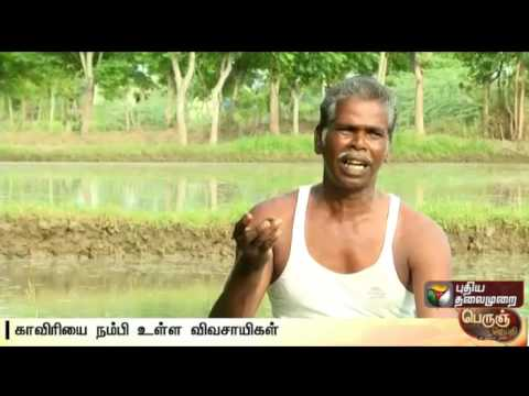 Agricultural-land-in-Cauvery-delta-has-reduced-due-to-irregular-monsoon-Details