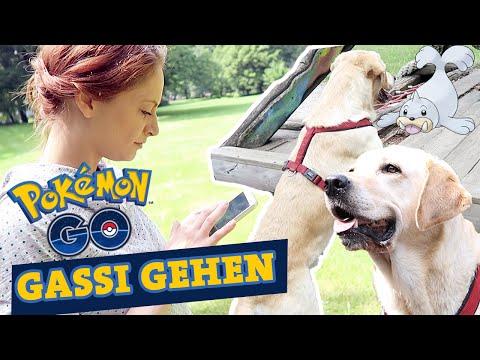 Gassi gehen | Joggingleine | POKEMON GO mit Hund Labrador
