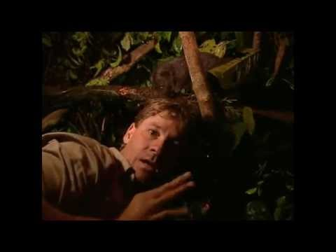 Steve Irwin vs. Tree Kangaroo.