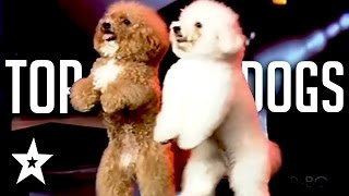Nonton The Best Dog Auditions Ever On Got Talent From Around The World Film Subtitle Indonesia Streaming Movie Download