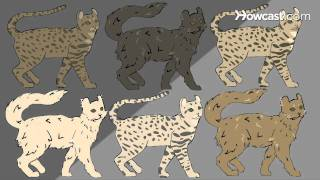 How To Identify Rare Cat Breeds