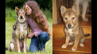 CLONING YOUR DEAD DOG – THE SAD TRUTH REVEALED..