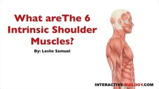 089 What Are The Six Intrinsic Shoulder Muscles?
