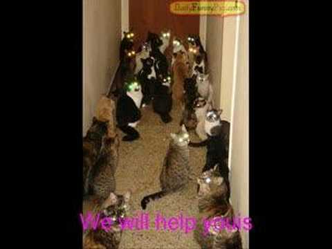 FUNNY CATS! MUST WATCH! (clean)