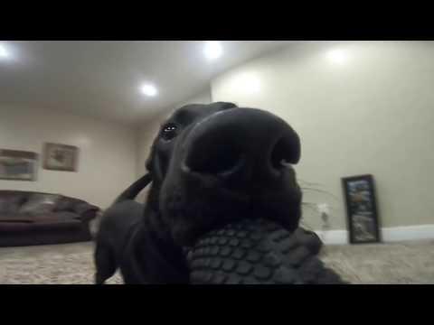 Kun koira nappaa kameran syntyy hauskaa kuvaa