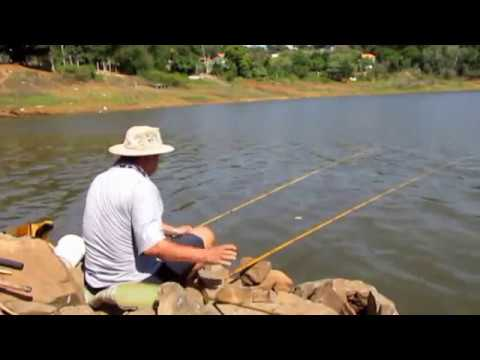 Pescaria do piau tres pintas no rio Machado