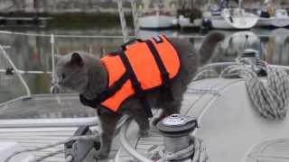 Кот Бакстон вернулся на свою яхту!