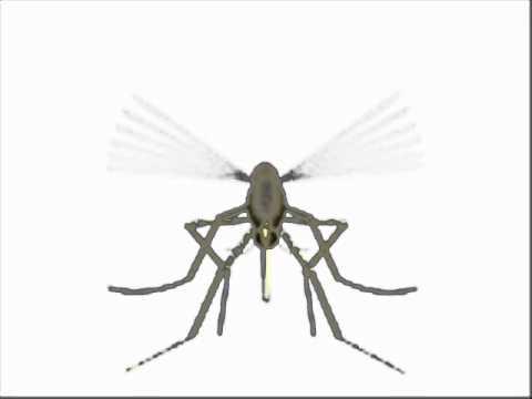 Pican Pican Los Mosquitos - Los Toreros Muertos.wmv