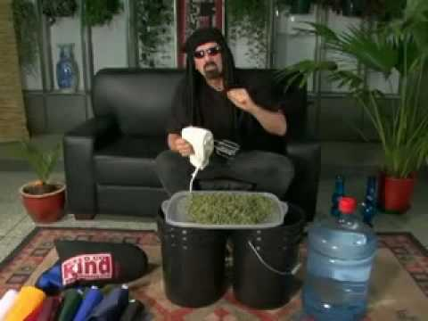 hash - A CLIP FROM JEORGE CERVENTAS ULTIMATE GROW GUIDE VIDEO.........ALL COPYRIGHTED MATERIAL IS USED UNDER THE GUIDELINES OF 