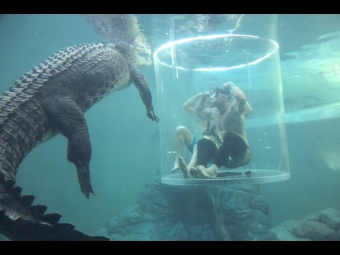 I Can't Believe This Is Happening | Cage Diving With Sharks & Crocodiles (видео)
