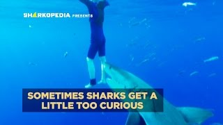 SharkWeek  Starts Sun Jul 23 When sharks get a little too curious... shark attacks rarely happen, but here's how to survive. Full Episodes Streaming FREE on ...