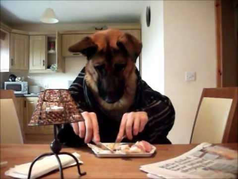 Kutya reggelizik