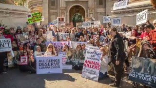 Worldwide Rally For Cecil