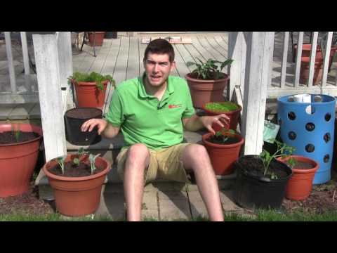 "<mark class=""comcode_highlight"">MIgardener</mark> 