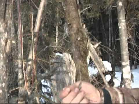 ловить лося на петли
